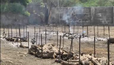श्मशान में लकड़ियों की कमीं, शव जलाने के लिए किया जा रहा गन्ने की खोई का इस्तेमाल, पहले से ही सजी चिताएं