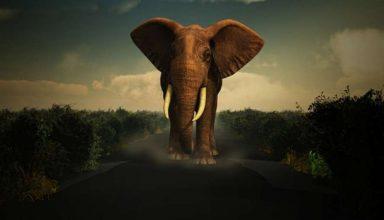 घर पर इस तरह रखें हाथी की मूर्तियां, बदल जाएगी आपकी किस्मत…