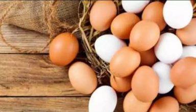वैक्सीन बनाने के लिए बढ़ी इस अंडे की डिमांड, कोरोना नहीं, ये हैं खास वजह