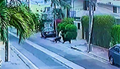 वकील साहब को कुत्ते ने काटा, अब मिली सजा-ए-मौत की सजा…