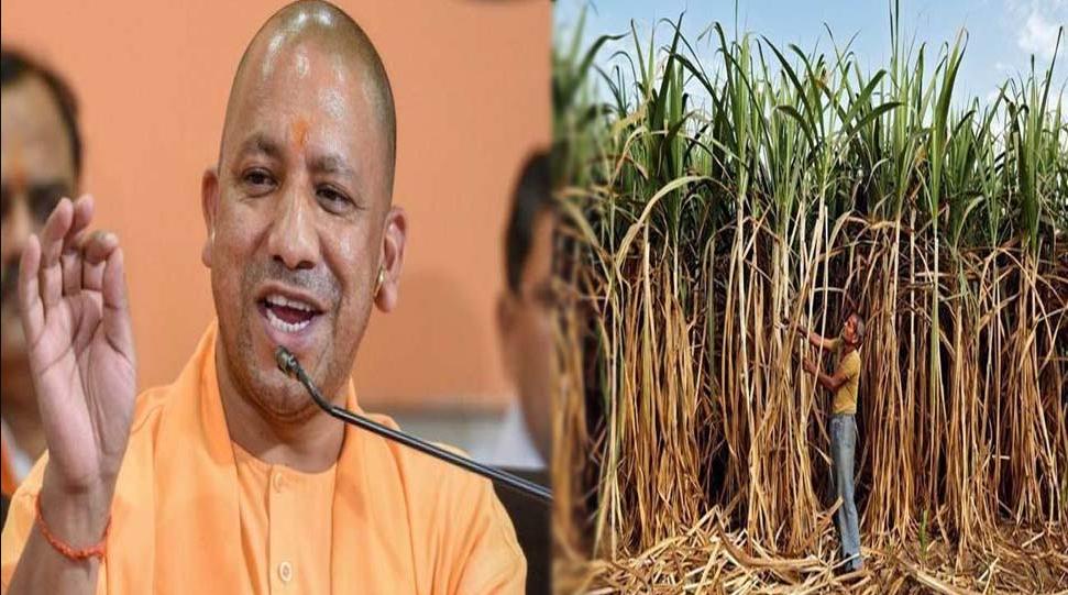 योगी सरकार प्रदेश के गन्ना किसानों को जल्द देगी खुशखबरी, गन्ना मूल्य बढ़ाने की तैयारी
