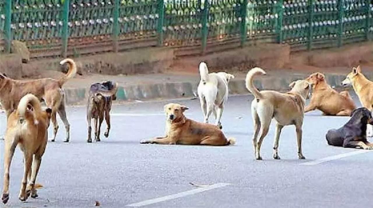 कर्नाटक में शिवमोगा जिले में बेजुबानों से हैवानियत, जिंदा दफनाए गए 100 से ज्यादा कुत्ते, कुछ को जहर देने की भी आशंका