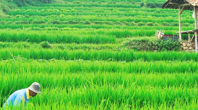 भारत में जैविक खेती को बढ़ावा देने वाली 5 सरकारी योजनाओ के बारे में यहाँ जाने