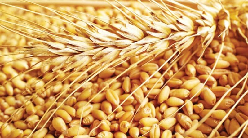 खाद्यान्न उत्पादन इस साल 150 मिलियन टन के नए उच्च स्तर पर पहुंचने की संभावना