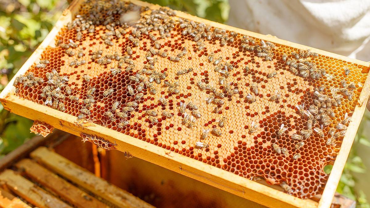 मधुमक्खी पालन नीति 2021,जानें यह किसानों की मदद कैसे करेगी